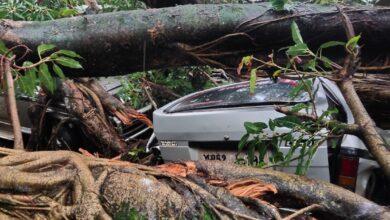Photo of भारी बारिश के चलते 50 वर्षों पुराना वृक्ष धराशाही