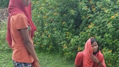 Photo of अंकुर योजना के तहत शहपुरा के कुड़दर गांव में रोपे गए पौधे